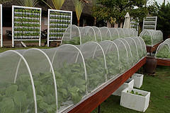 Outdoor Hydroponics