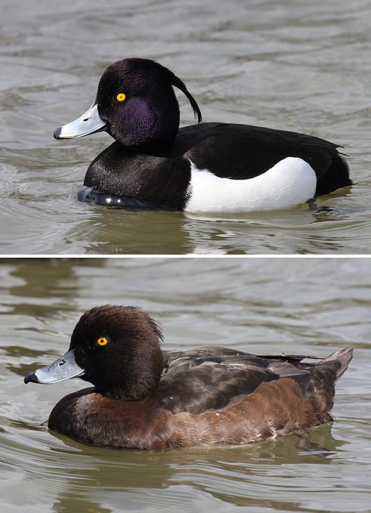 Male above female below.