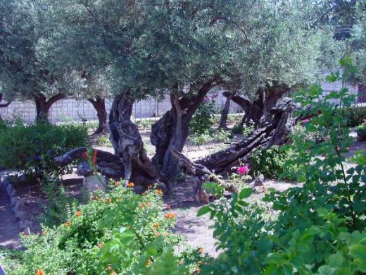 Gethsemane, Israel 2000