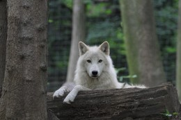 The wolf is a powerful and supportive spirit guide.