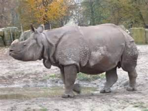 Rhinos are fun to watch, but do stay away from them for your safety