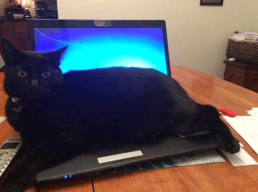 Cat having a nap on a warm keyboard.