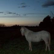 CowgirlKacy profile image