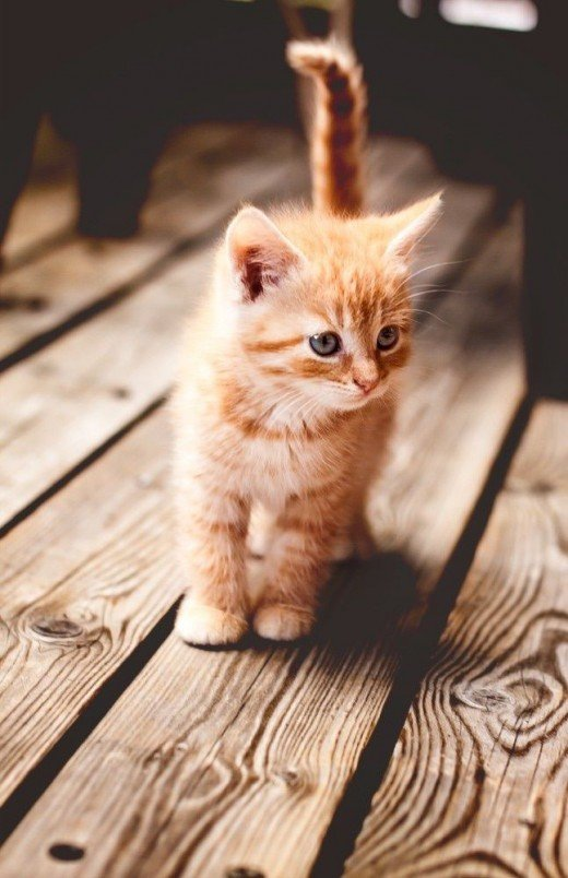 How To Decode Your Cats Behavior PetHelpful - 18 hilarious sad cat problems that might explain why your cats so moody