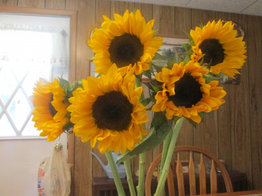 Sunflowers bought at the Farmer's Market on Main Street in Pittston.