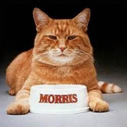 Morris, the cat--9 Lives catfood