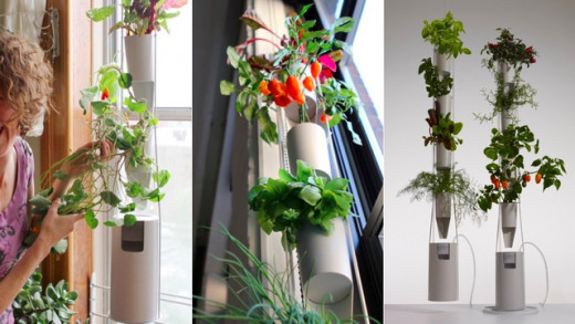 If you don't have a lot of space, then a verticle style hydroponic unit will work better. Like this mini hydroponic farm shown in the picture, you can grow almost anything.
