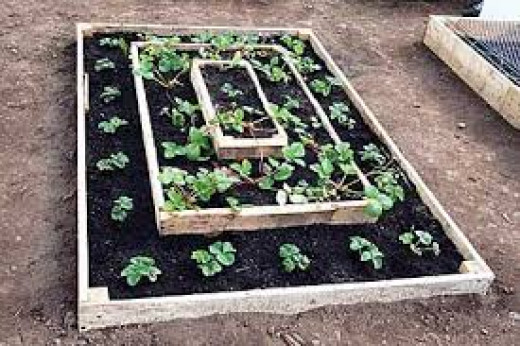 Raised-bed planting system