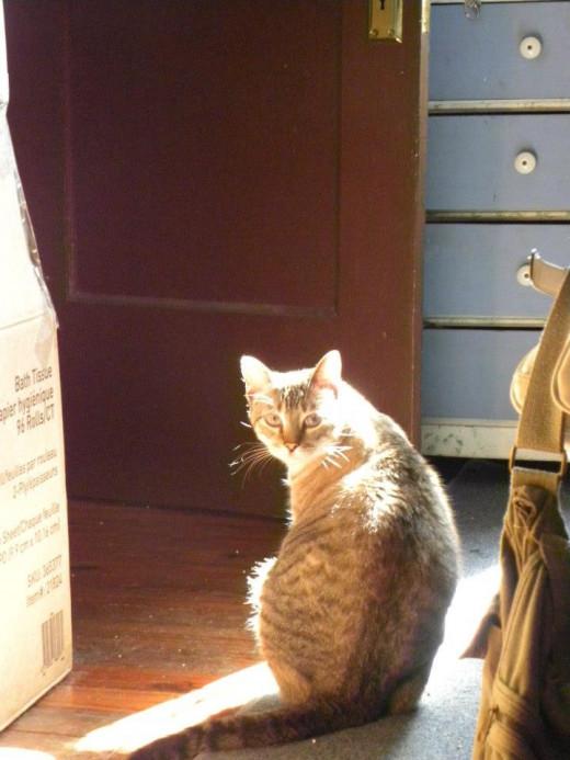 Sunlight behind illuminates Harvey's hair.