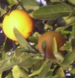 Oranges symbolize abundance and happiness