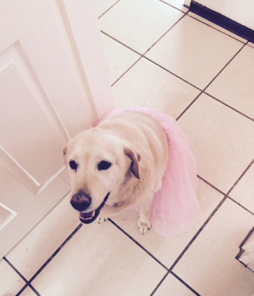 Honey preparing for her ballet recital