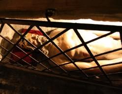 The Holy Sepulchre of Bruges-la-Morte