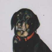 samanthamjordan profile image