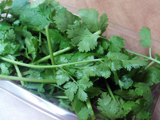 Cilantro is one of my favorite cooking ingredients. It is cool-tasting in the potato salad offered below.