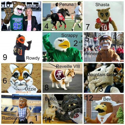 Collage of Texas University mascots quiz picture