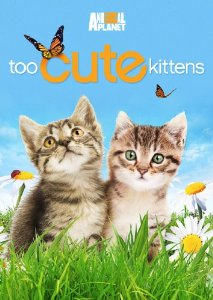 DVD cover for Too Cute: Kittens.