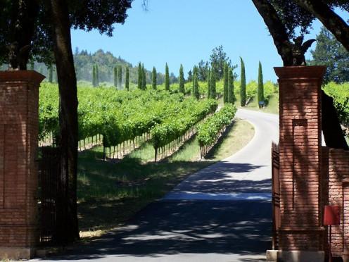 Napa, California vineyard.