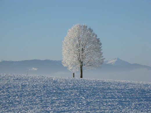While winter on a homestead is beautiful. There are many challenges to survival.