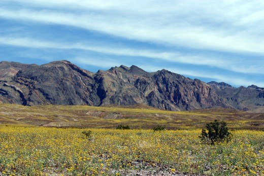 Death Valley in Spring