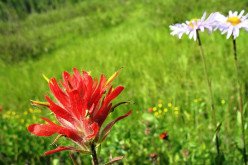 Texas Employment: Over 188,000 Jobs In Flower Mound, Indian Paintbrush Paradise