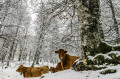 How To Care For Livestock In Winter