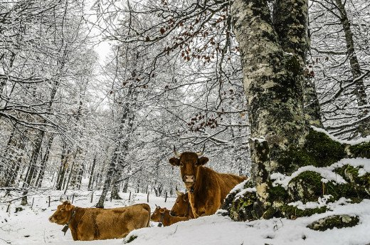 Livestock are susceptible to much more in winter than you may think.