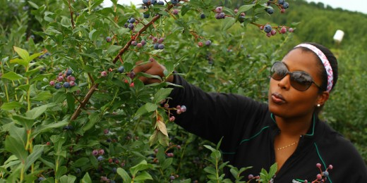Go pick blueberries or other fruits together.
