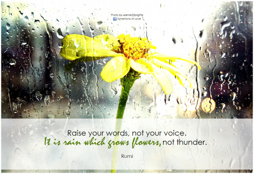 """Raise your words, not your voice. It is rain which grows flower, not thunder."" ~ Rumi"