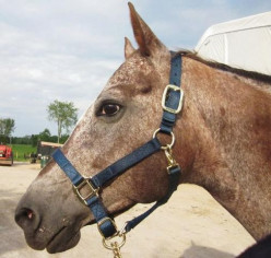 Five Ways to Clean Your Horse's Nylon Halter