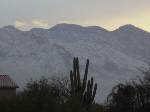 Cacti silhouetted against the snow covered Santa Catalina Mountains in Tucson Arizona.