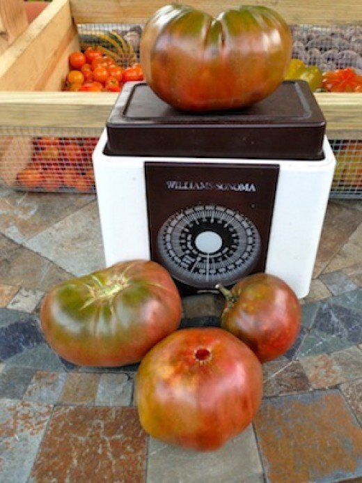 Black tomatoes - Carbon in front, Black Krim on the scale, are winning more and more taste tests for their rich, complex flavors.