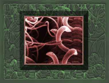 Image courtesy inventors.about.com – Velcro