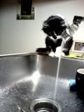 Giving My Cat A Bath