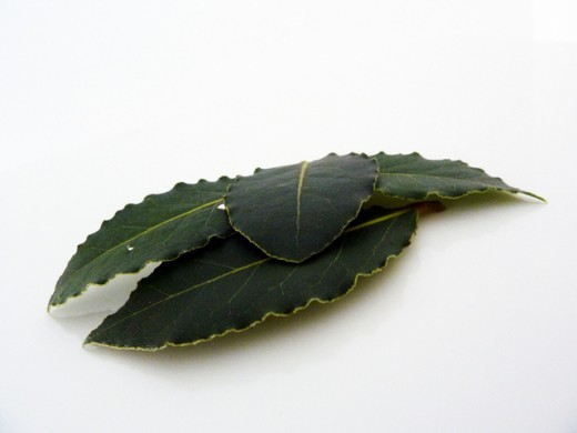 Use bay leaves in magic to protect against negative energy and lightning.