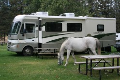 Park horse grazing by our RV.