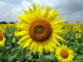 Edible Landscaping: 23 Flowers You Can Eat