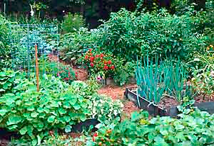 A healthy garden needs nutritional input and care