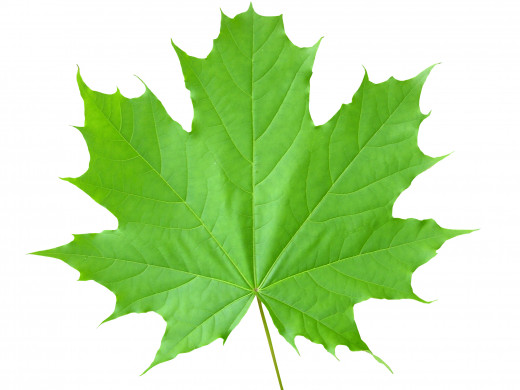 Take a look at a leaf, simple thing to us... and view the intricate details of that leaf, and think to yourself, how unique the mind that brought this leaf into existence. Be curious.