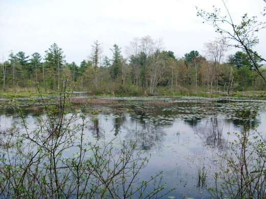 Pond at Canoe Meadows wildlife sanctuary.