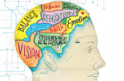 What kinds of things happen in the adolescent when their frontal lobe starts to form?
