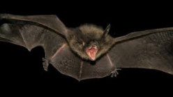 My Creepy Encounter with a Bat