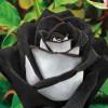 royalblkrose profile image