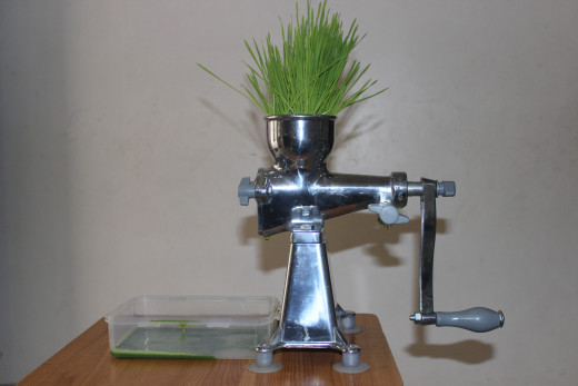 Wheatgrass being juiced on a manual type slow juicer