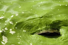 Thick and green water