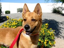 Austrailian Cattle dogs are loving, loyal, energetic and extremely smart!!