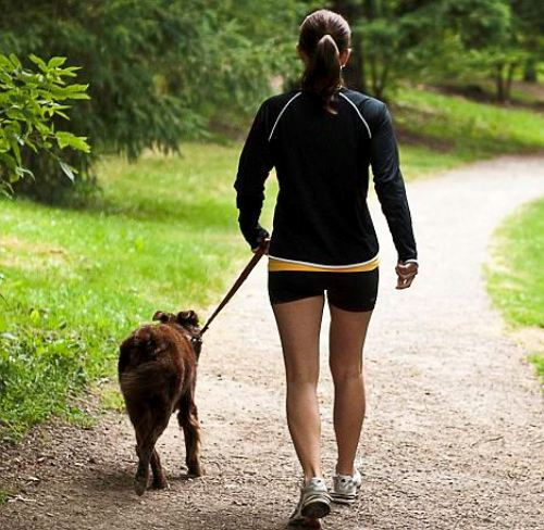 Walk Your Dog Early Morning and Feel Refreshed