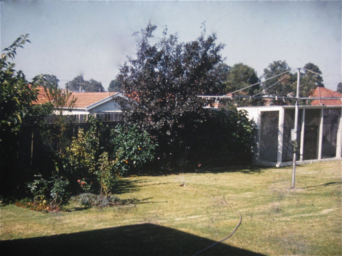 Simple backyard, enough garden and the aviary where we raised budgerigars. Only exists in these photos now.