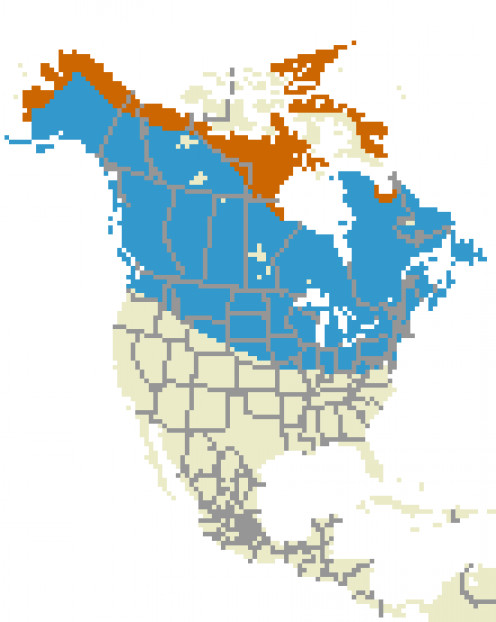 This is a Hoary Redpoll range map.
