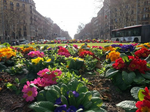 A city community garden