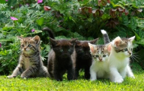 Adorable little kittens!